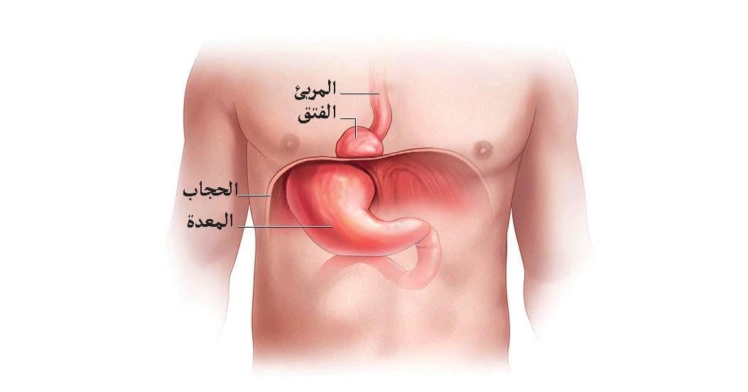 You are currently viewing أسباب و اعراض مرض فتق الحجاب الحاجز| و 4 أنواع الفتاق